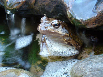 Frog Photo by Muddy-The-Fox