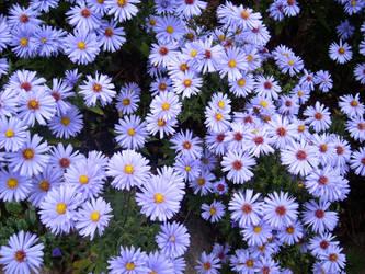 Herbstblumen Explore Herbstblumen On Deviantart