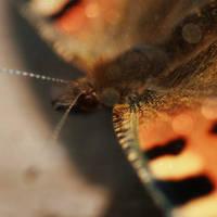 butterfly by Wysseri