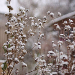 First Snow by Wysseri