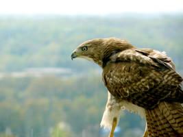 Hawk'scope by haha-wow