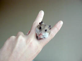 Eugene the Hamster by haha-wow