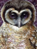 Owl3 by steyfi