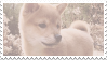 shiba inu stamp #5 by stratosqueer