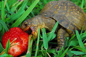 Turtle by xandju