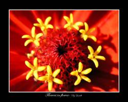 Flowers in flower by lexidh