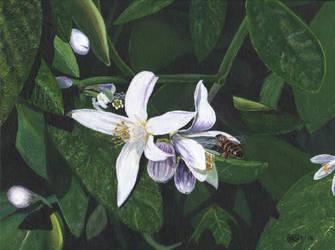 Lemon And Honey by Rivercoon