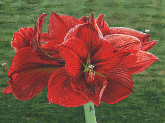 Amaryllis And Ants by Rivercoon