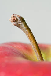 Apple by patrykcyk