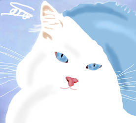 White Cat ^.^ by ShoftWhiskers