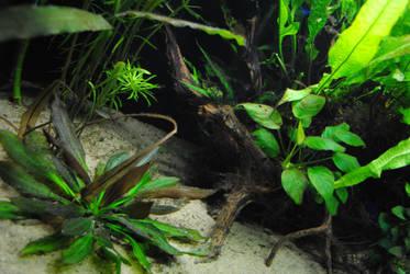 Underwater by aoi-doragon