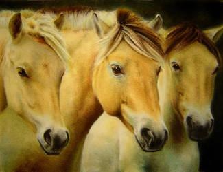 Horses by baileymcdoogle