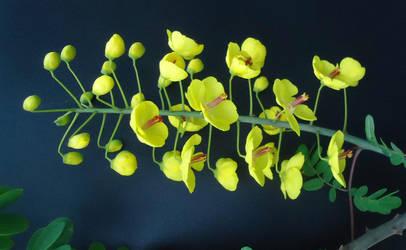 Flowers by AANGELOO