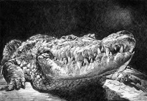 Crocodile by Ionandaar