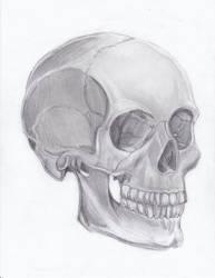 Skull by fleurdevereux