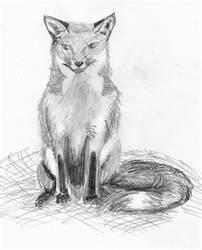 Fox Standing by fleurdevereux