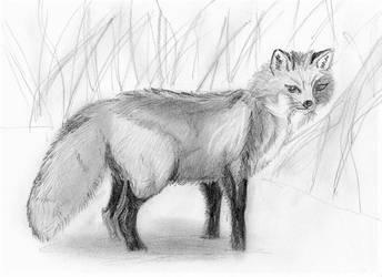 Fox 2 by fleurdevereux