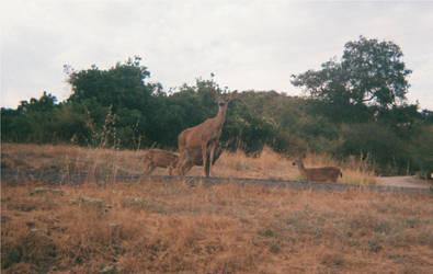 Oh, deer! by Firragol