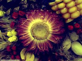 Flower by Numizmat
