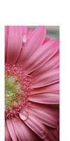 + Chrysanthemum V.2 by silentglaive