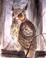 eagle owl by Diaris