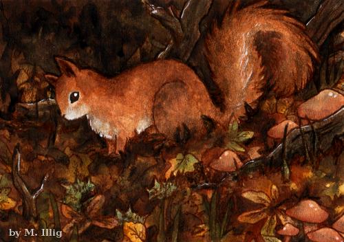 Squirrel! Suquii qui urell... by Diaris