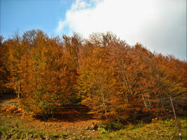 Romanian forest by s3xyyy