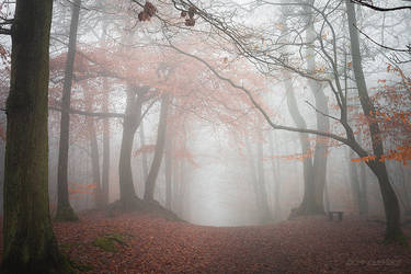 Ethereal walk by dominique-merot