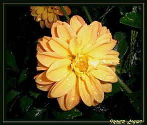 Inner Light by FlowerLisa