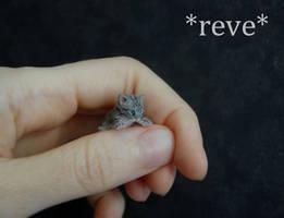 Tabby Kitten Handmade Miniature Sculpture by ReveMiniatures