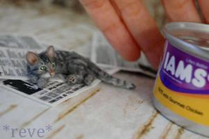 Dinner is ready!  * Handmade Cat * =^..^= by ReveMiniatures