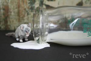 Got Milk? ~ Handmade Miniature Birman Cat by ReveMiniatures