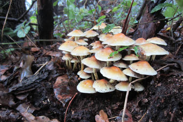 Toadstools in the forest by Nexils