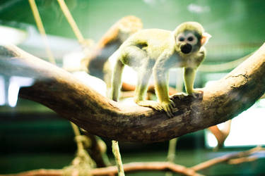 Oh monkey by Izzilar