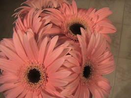 Pink Boquet by rootedinfaith3