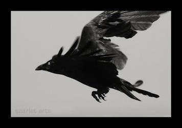 Crow by scarletarts