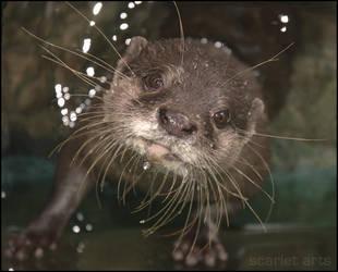Otter by scarletarts