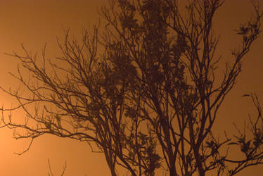 Orange tree in the fog by wasge