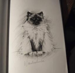 Day 7: a cat by Szura69