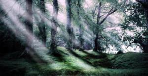 Premade BG: Forest by screamflight