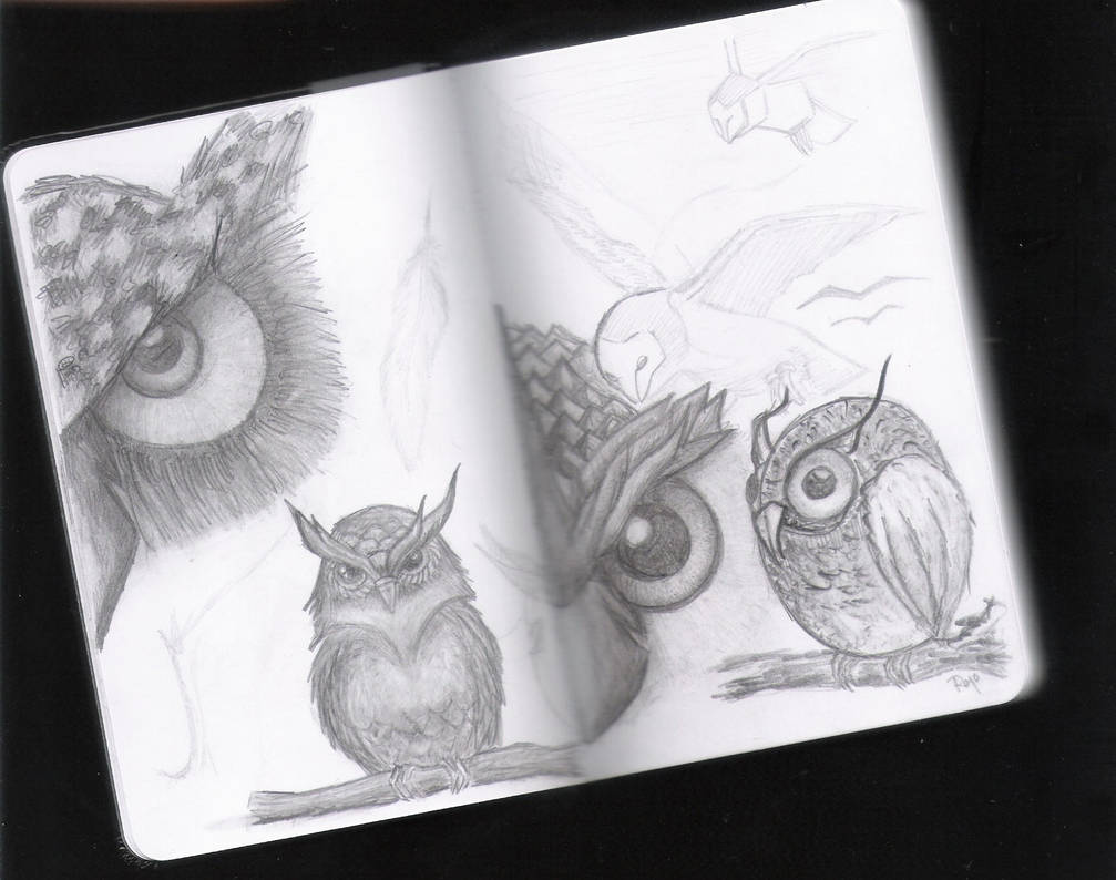 Buhos Owls Practise Shadows By Onewolfy On Deviantart