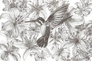 Humming Bird by Taylove13