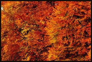 united colors of autum by zelenamidori