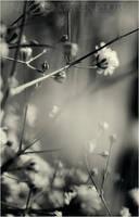 delicate. by Infinite-Starlight