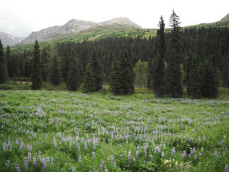 Blue Flowers Meadow 10 by prints-of-stock