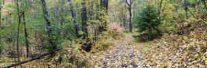 Forest Panorama 1 by prints-of-stock