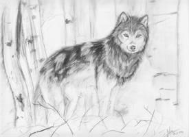 +Realistic wolf+ by Ishisu