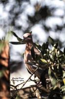 Pigeon by KhaledFanni