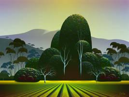 Napa Vineyard by TomCarlos
