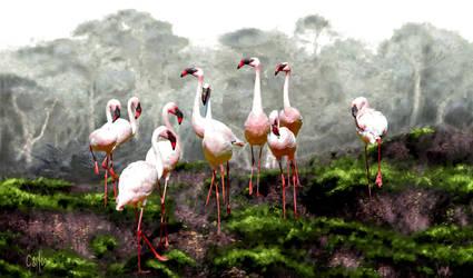 Pink Flamingos by TomCarlos